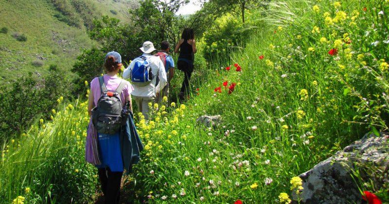 Spring in Northern Israel