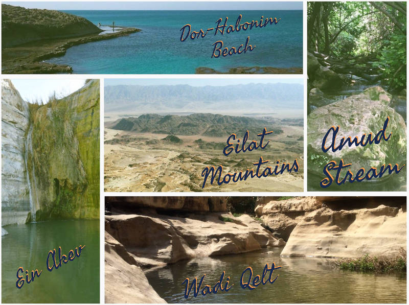 Best Hikes in Israel. We selected one notable hike from each area.
