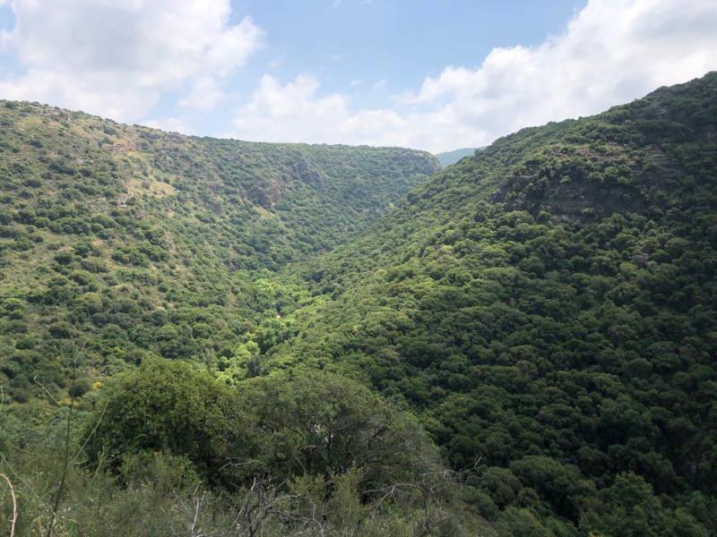Nahal Kziv forest