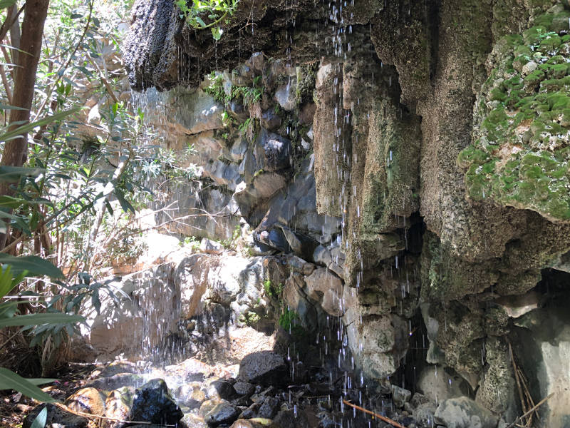 Netef Spring in the Yehudia National Park